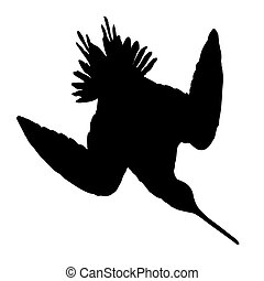 Snipe Silhouette - Birds Silhouettes Vector EPS 10