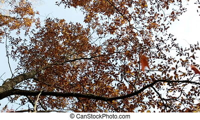 Autumn tree with bright foliage on a blue sky background and...