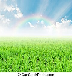 field on a background of the blue sky with rainbow