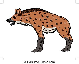 hyena, illustration of wildlife, zoo, wildlife, animal of...
