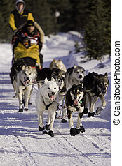 Iditarod - A dog team begins its journey to Nome, Alaska...