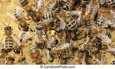 Bees build honeycombs and honey close to them