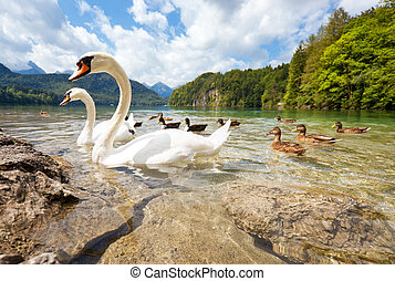 Alps lake with birds. Wide angle view.