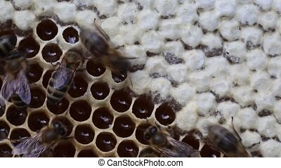 Bees close honey for long-term stor - Bees convert nectar...