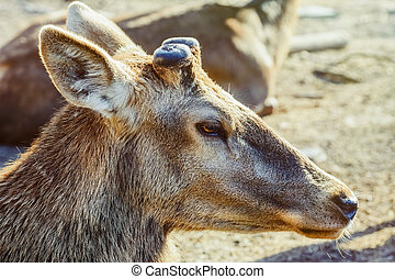 Portrait of Deer without Horns