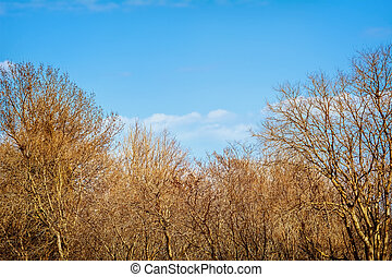 Bare Trees in the Winter