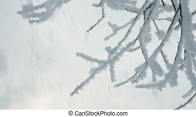 Tree branches in the snow - Photo of snow covered branches...