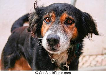 Angry dog just before bark Closeup shot, Lagos, Portugal