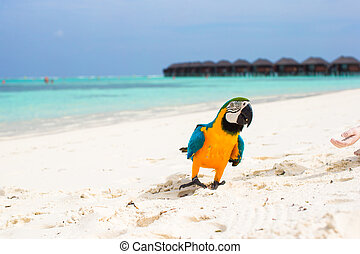 Wild colorful bright parrot on white sand at tropical island...