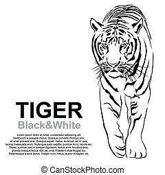 Tiger walking stride Victor - Tiger walking, black and...
