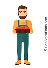 Farmer collecting tomatos - A hipster farmer with the beard...