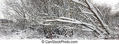 Trees after snowfall Panoramic view - Trees covered with...