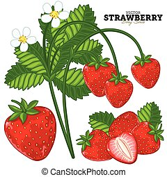 Strawberry Set, Vector. - Set Strawberry Compositions,...