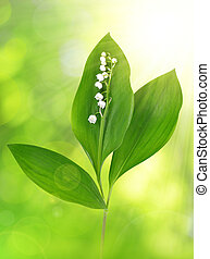 Twig of Lilly of the valley