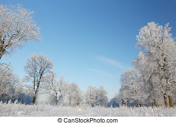 Snow-covered trees - winter landscape of snow-covered trees