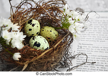 quail spotted eggs in a twig nest