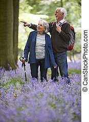 Senior Couple Walking Through Bluebell Wood