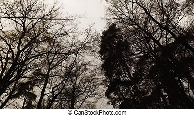 Trees in the Dark Mood Weather