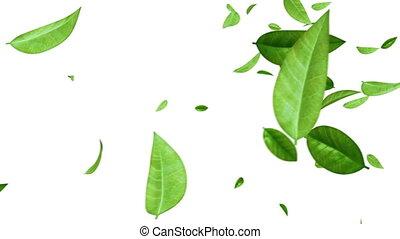 Green Leaves Flying on White