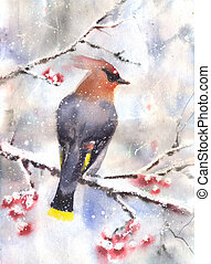 Waxwing sitting on a branch - Water color drawing of a...