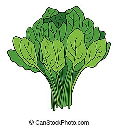 Spinach - Cartoon illustration of a bundle of spinach