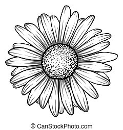 beautiful monochrome, black and white daisy flower isolated....
