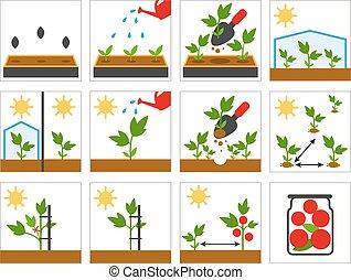 Groving sedlings. Farming seedling