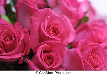 beauty roses - beauty pink roses