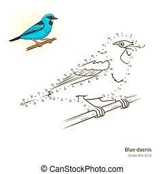 Blue dacnis draw vector - Blue dacnis learn birds...