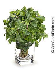 Fresh herb spearmint