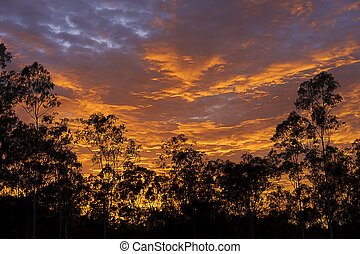 Dramatic australian sunrise with Gum tree silhouette - Early...