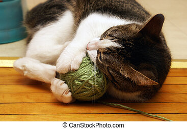 Active Yarn Playing - A domestic housecat plays with its...