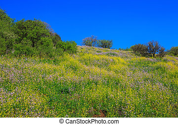 The Golan heights in fine sunny day - The legendary Golan...