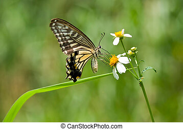 Beautiful swallowtail butterfly flying over flowers