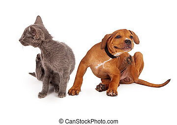 Kitten and Puppy Scratching - A small kitten and puppy...
