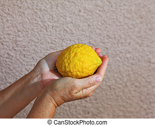 Woman's hands holding citrus fruit - Citron - etrog - an...