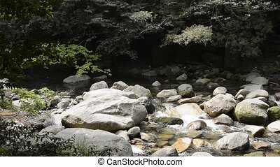 Brook flowing among stones under deep green laurel forest