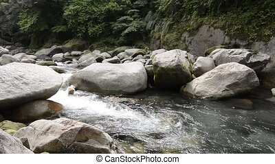 Narrow brook flowing - While narrow brook meander flowing...