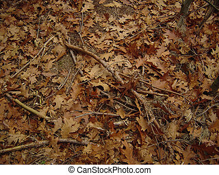Autumn mess - twigs&leaves - autumn mess background