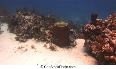 Hard stony corals on the seabed - Hard stony corals on the...