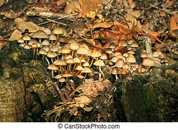 A lot of mushrooms in the forest