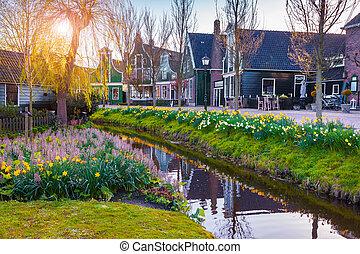 Wieś,  zaanstad, Prospekt, typowy, Holenderski