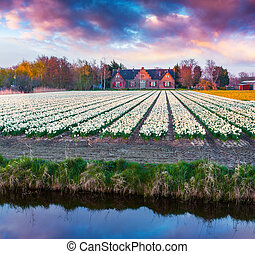 Colorful spring scene in Netherlands First sunlight glowing...