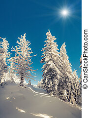 Sunny winter scene in the mountain forest.