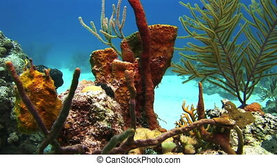 Sea sponge Close-up Underwater Coral Reef and Tropical Fish...