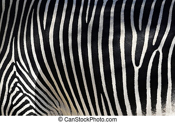 Zebra Skin - Black and white texture of zebra skin - equus...