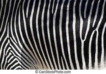 Zebra Skin - Black and white texture of zebra skin - equus...