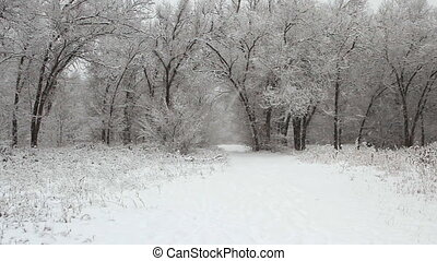 winter park with snow covered trees - Snowfall in a winter...