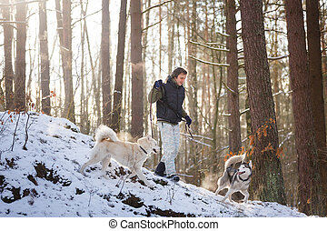Man with husky dogs - Man walking with husky dogs in winter...