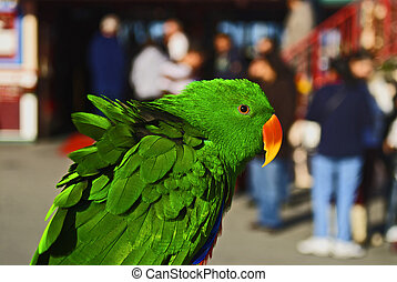 A male Eclectus Parrot sits on a windy day - The wind is...